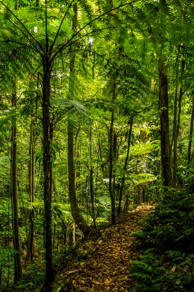 Rainforest clad walking track to Rawson Falls Boorganna Nature Reserve