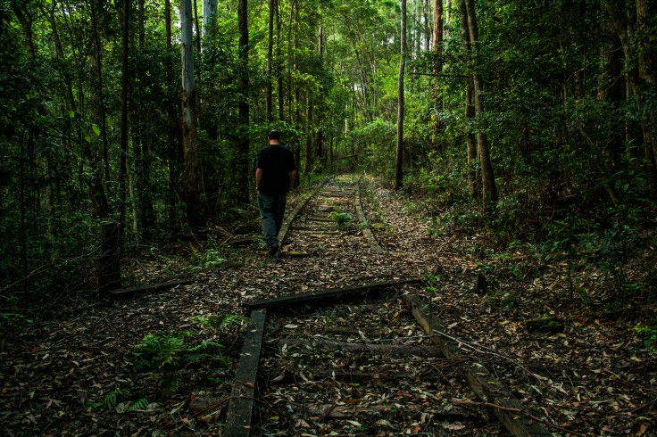 The historical Tramline Walk near Swans Crossing Kerewong State Forest