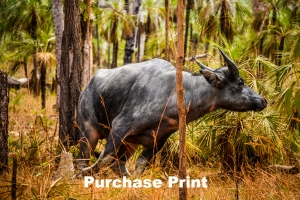 buffalo-purchase-now