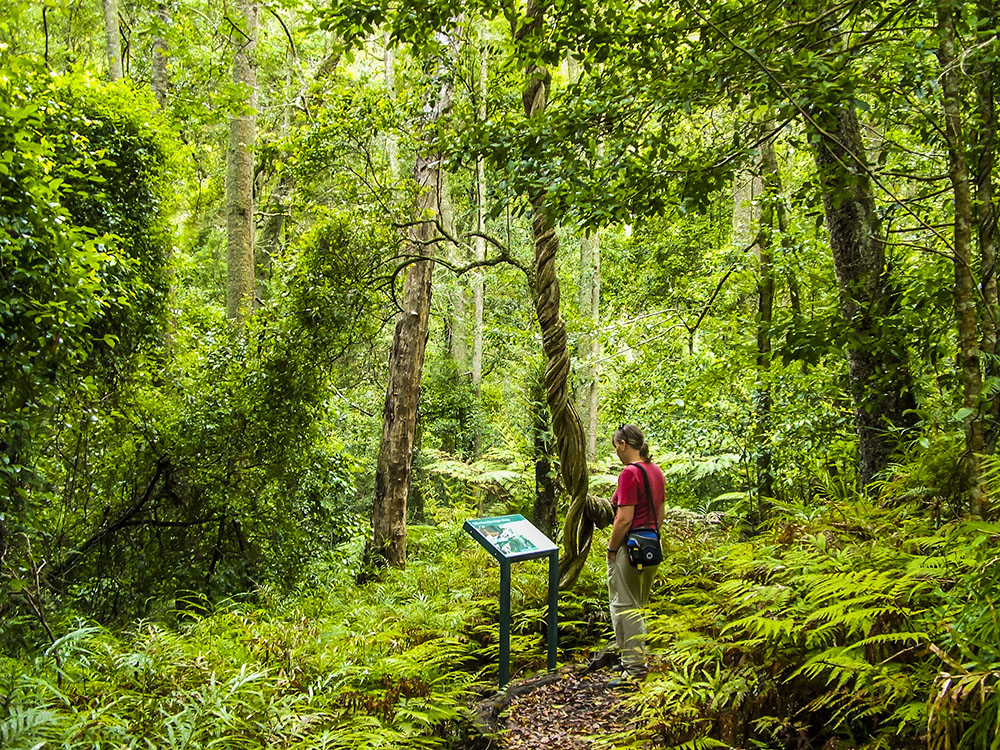 south east forest np goodenia rainforest walk