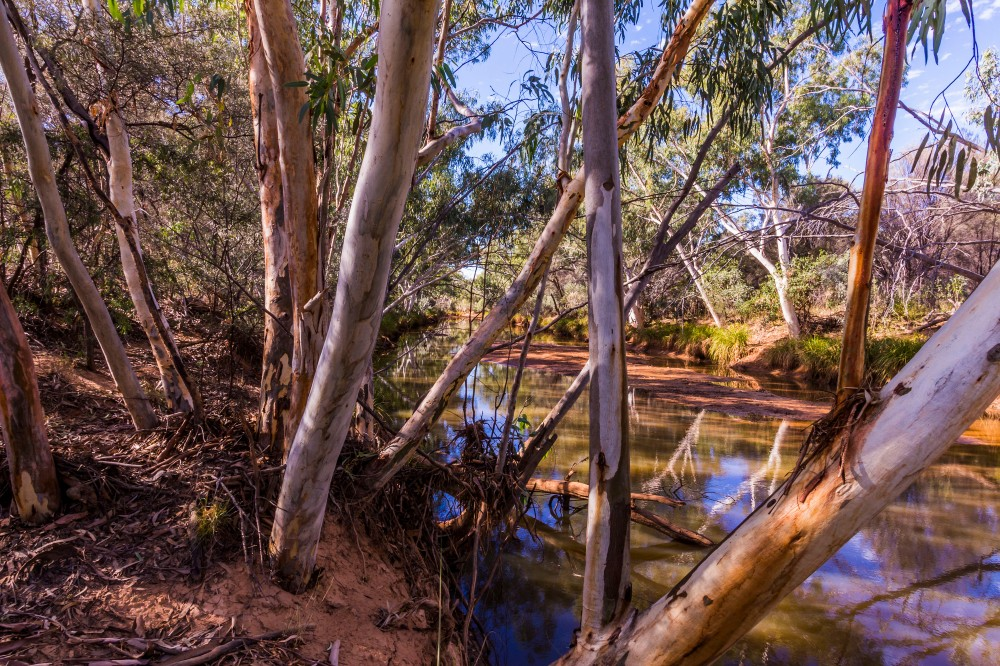 Sawyers Creek along the Mulga drive