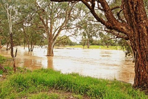 The raging torrent of the Warrego River at Charleville