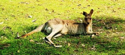 One of the 'residents' relaxing at Peach Trees