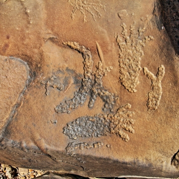 more ancient petroglyphs