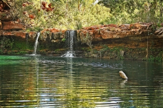 Picture perfect Fern Pool