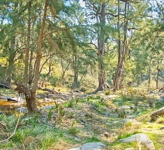 The almost dry Silent Creek