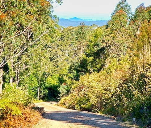 The road to Blue Knob Lookout