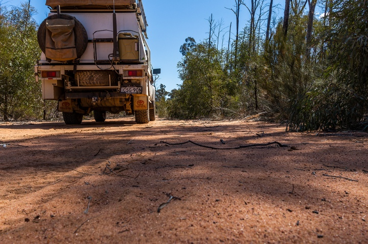 Travelling the Pilliga Forest